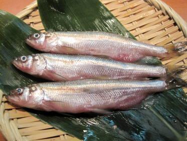 とびっこ なん の 魚